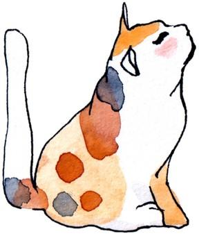 Side sitting calico cat