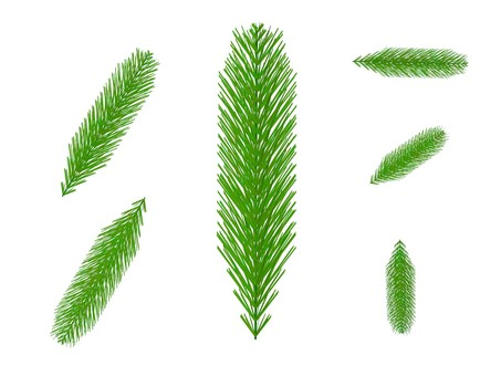 Fir leaves