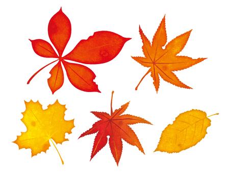 Autumn leaves leaves
