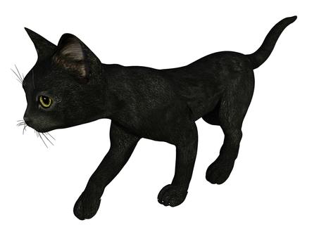 歩く子猫(黒猫)