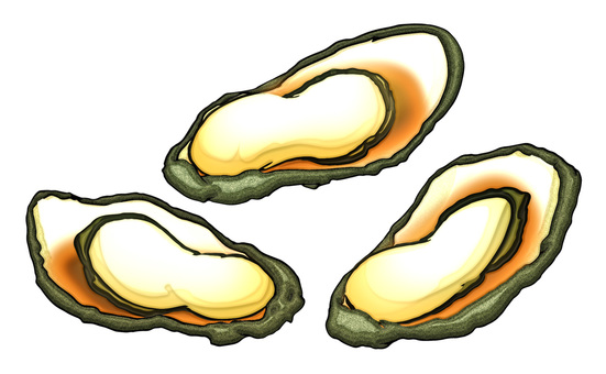 Oyster / oyster / baked oyster