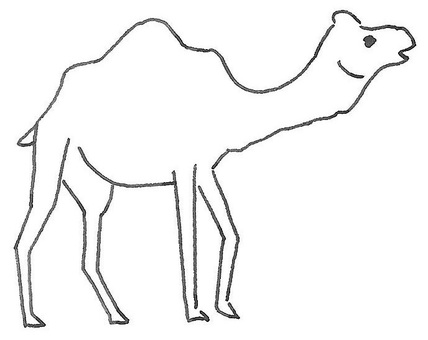 Camel dromedary camel