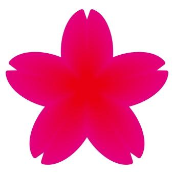 Sakura 11