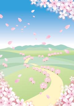 Spring scenery Sakura 7