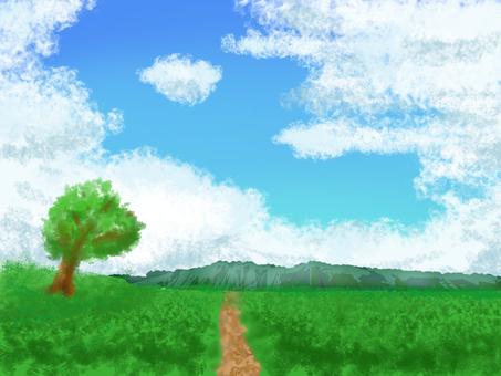 여름의 길