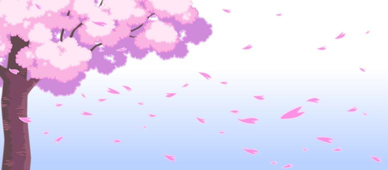Sakura -005