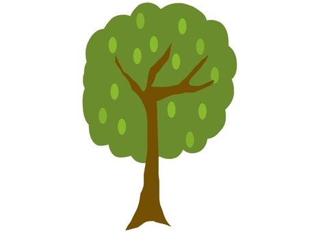 나무 진한