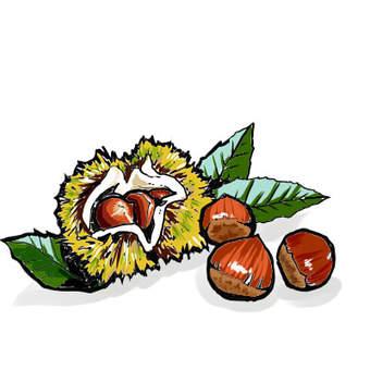 Chestnut color