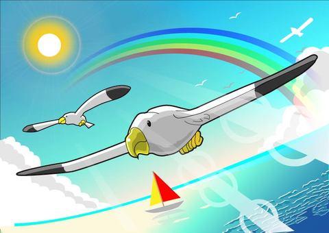 Seagull - Illustration