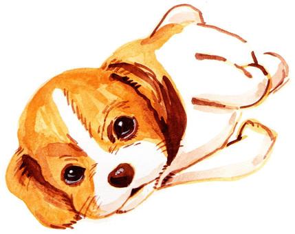 Negami Beagle