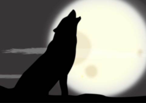Full moon night and wolf