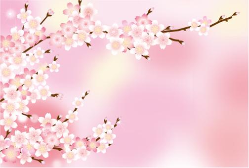Cherry branch background Pink