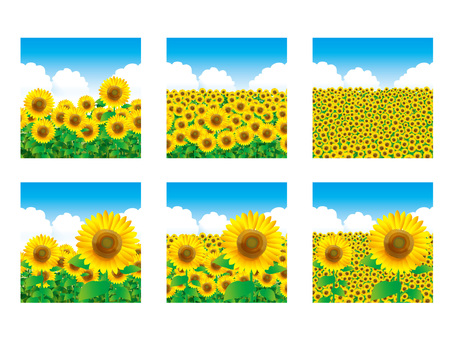Banner square: sunflower field