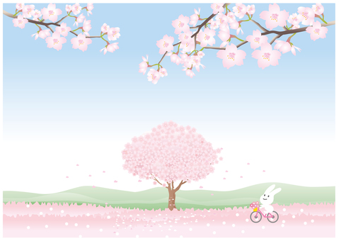 Cherry tree scenery and bicycle
