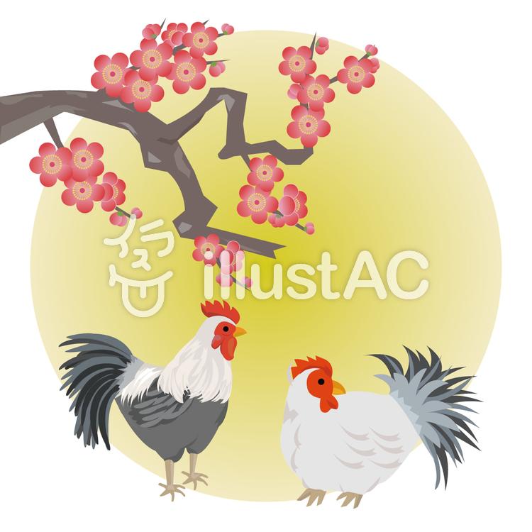 酉年 梅とに二羽の鶏のイラスト