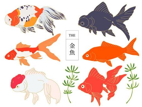 THE金魚B