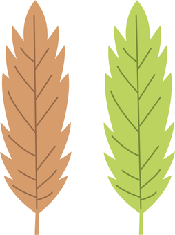 【植物】橡子叶