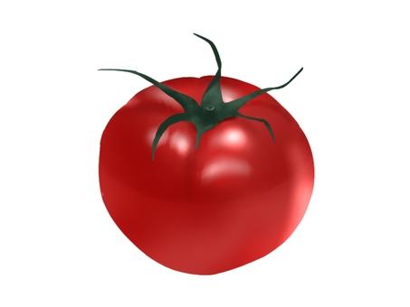 Realistic tomato