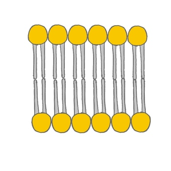 Schematic diagram of cell membrane