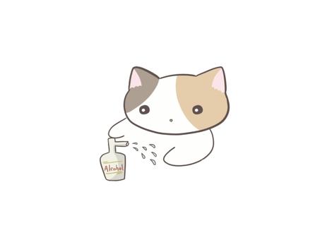消毒する猫