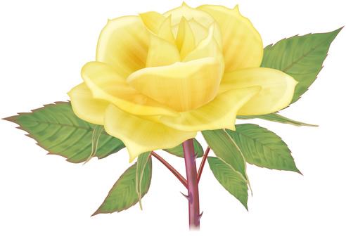 Rose / 8