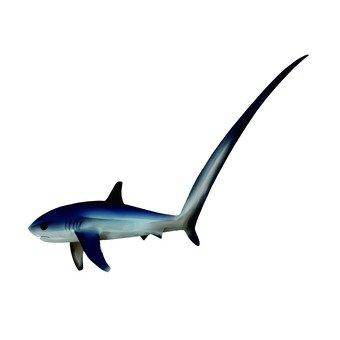 Bullfight shark 2