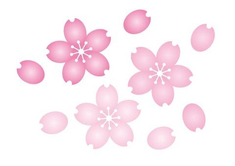 Sakura 010