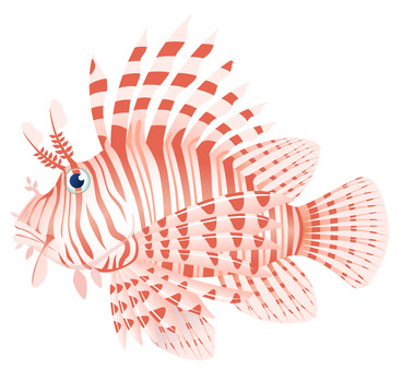 Lionfish Lion Fish