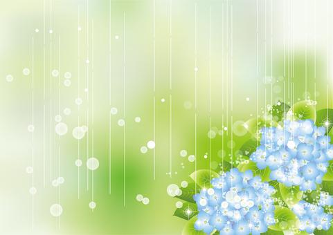 雨の中の紫陽花72