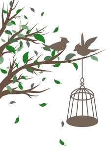 Bird illustrations (no background)
