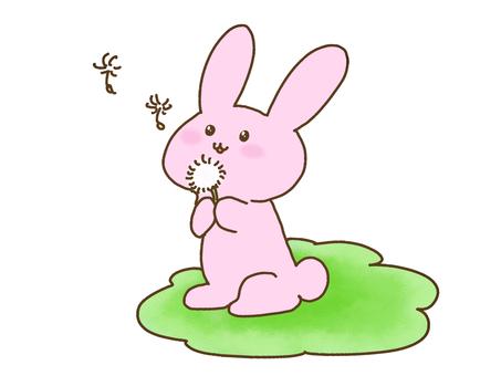 토끼와 민들레