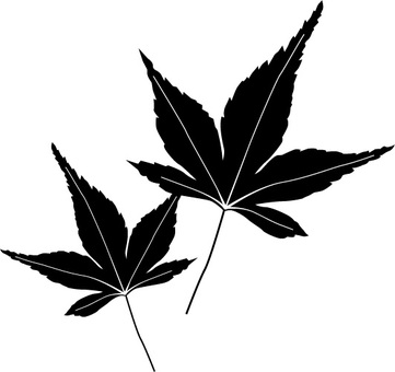 Leaves of autumn leaves Black and white