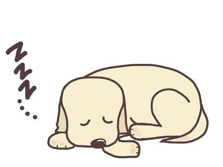 A dog under a nap