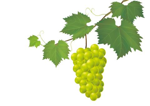Grape _ Green