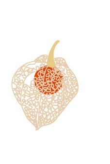A stylish illustration through the leaf vein of Hozuki
