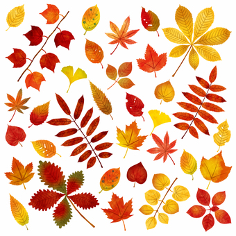 Autumn leaves / gathering
