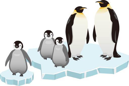Emperor Penguin parent and child ice
