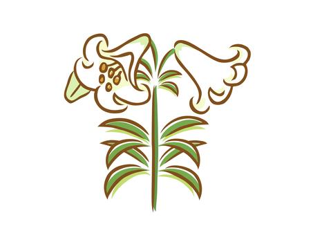 Shila lily