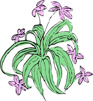 식물 일러스트