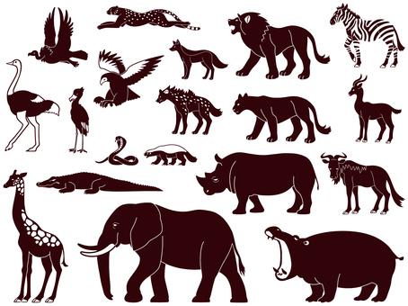 Animal of Africa