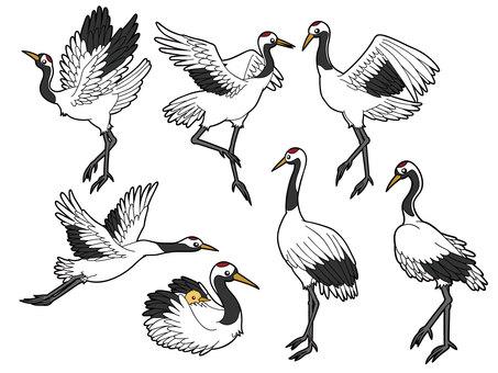 7 species of crane