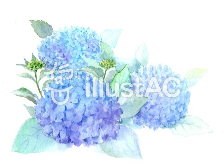 水彩で描く紫陽花