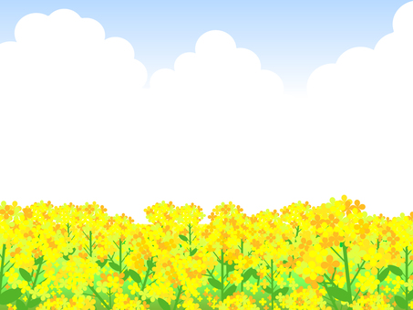 Spring landscape illustration Rape blossoms Field