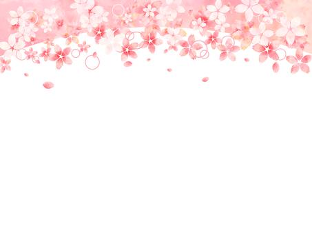 벚꽃의 프레임 (위)
