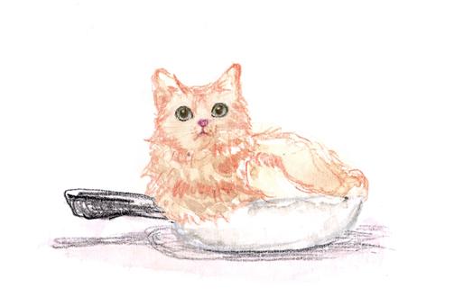 Pot cat background white horizontal