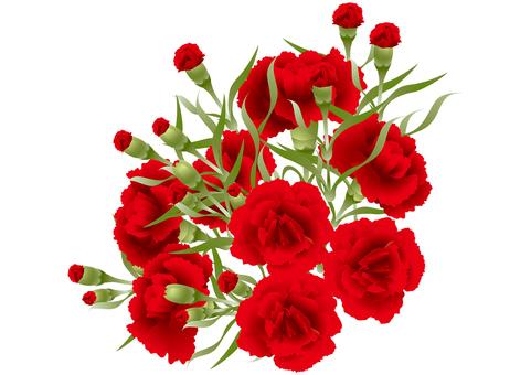 Carnation 39