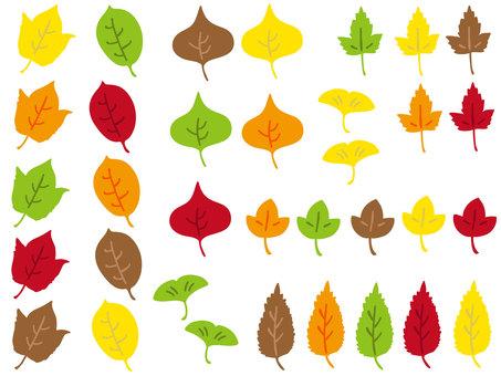 Various fallen leaves