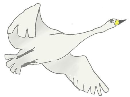 Swan flying swan