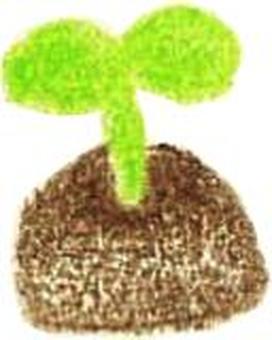 식물의 작은 새싹
