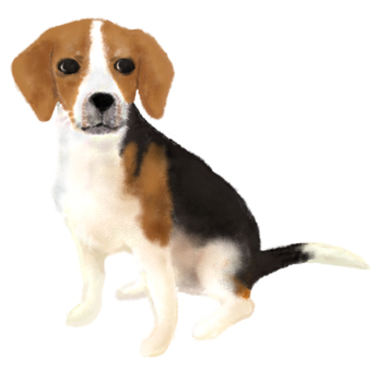 Sizzling beagle
